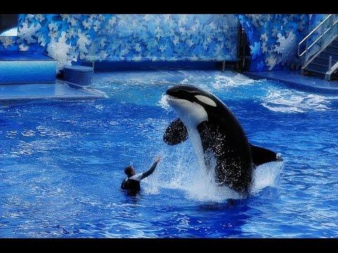 Sea World Orlando, Viajem a Walt Disney World. Estados Unidos, Flórida, Horlando e Kissimmee.