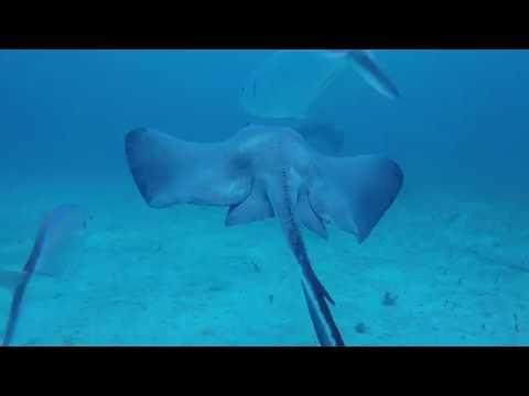 Stingray City Grand Cayman Island