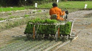 Copy of Redlands Rice transplanter