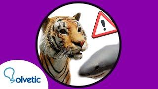 🐻 🐟  ANIMALES 3D Google NO FUNCIONA | 𝗦𝗢𝗟𝗨𝗖𝗜𝗢𝗡 ✔️