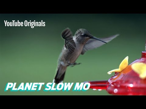 How Fast Can a Hummingbird Flap?