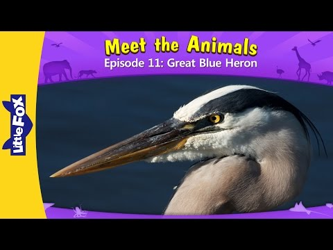 Meet The Animals 11 | Great Blue Heron | Wild Animals | Little Fox | Animated Stories For Kids