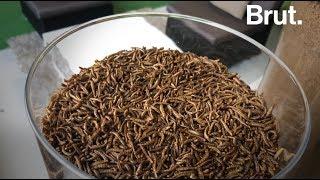 France : la première ferme à insectes comestibles