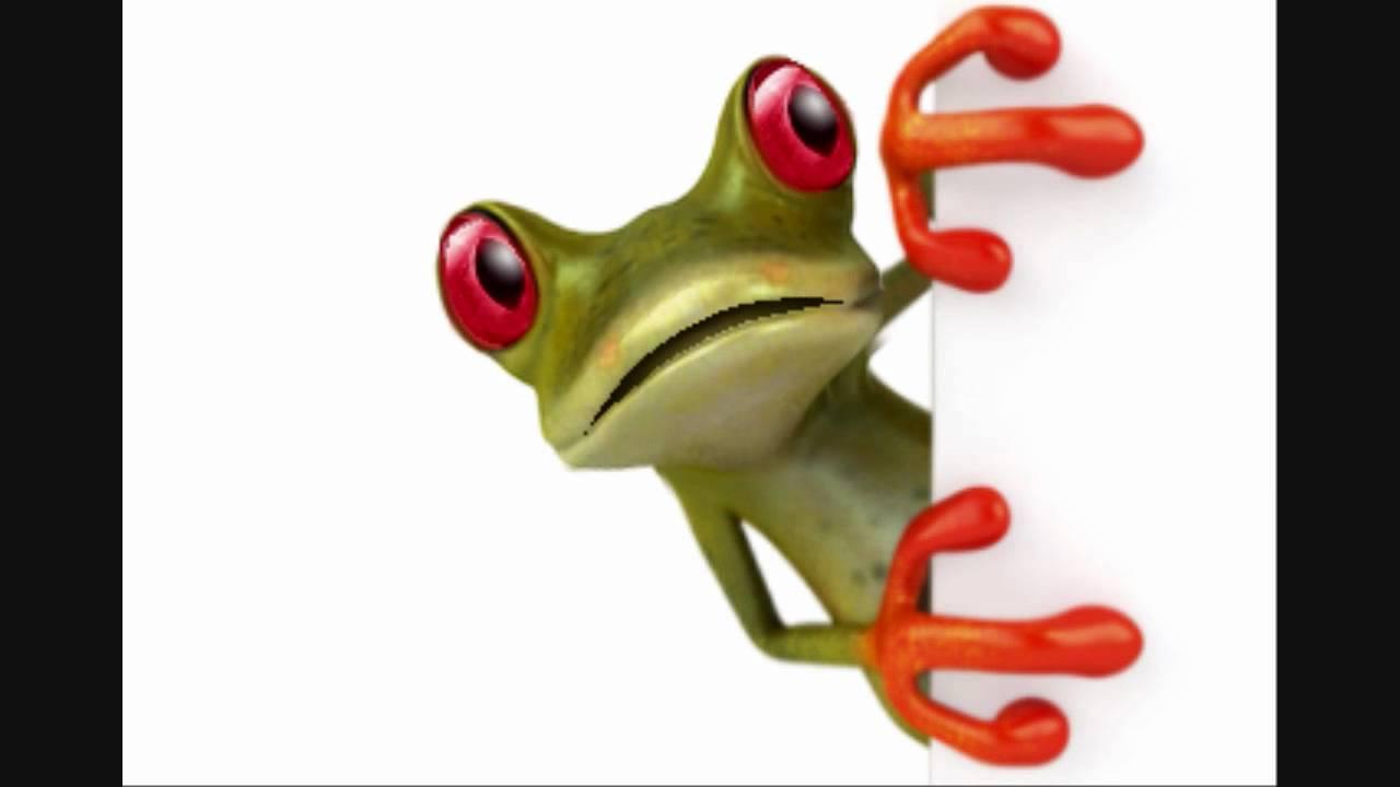 histoire drole de grenouille
