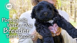 Portuguese Water Dog Breeder  Terri Pecora