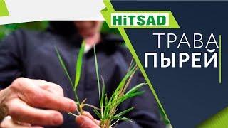 Как навсегда избавиться от травы Пырей ✔️ Советы от Хитсад ТВ