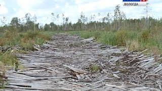 Представители ОНФ проверили законность вырубки деревьев в Соколе(Представители центрального штаба