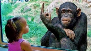 Fun and Fails! Funny Babies Cuddling Animals#1|| Funny Baby and Pet