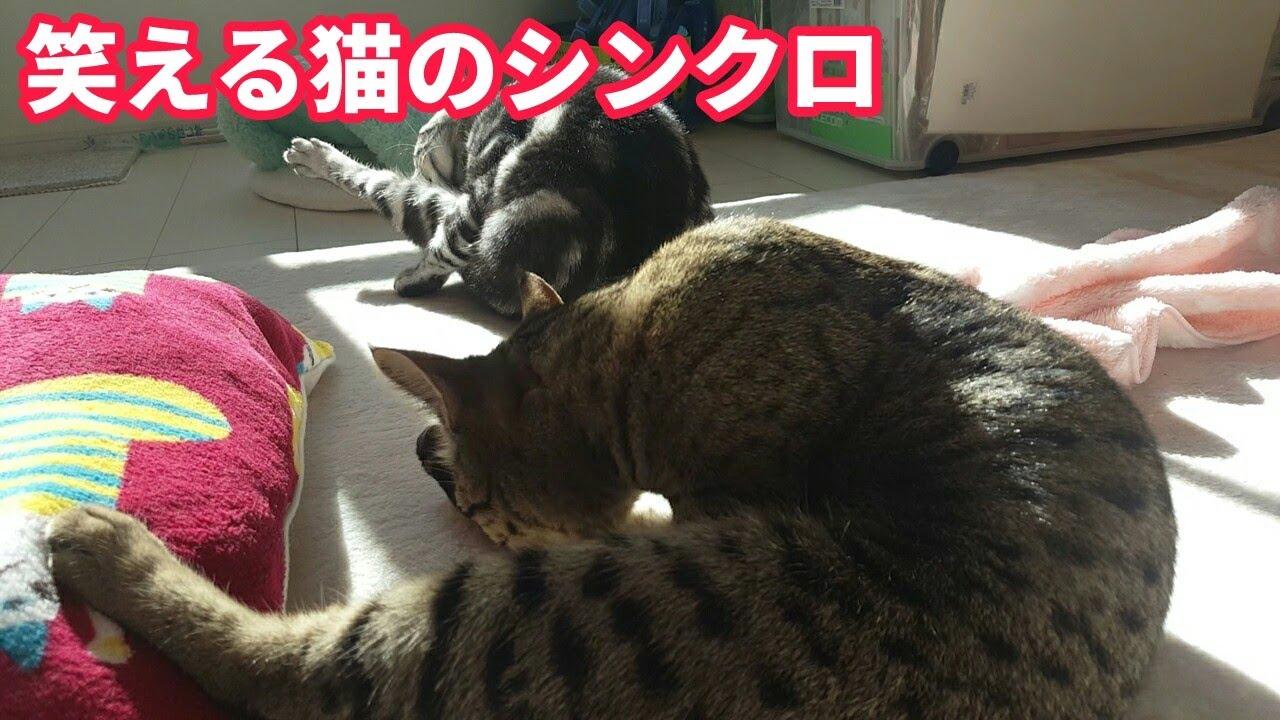 笑える猫のシンクロ