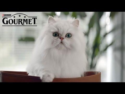 Γάτες - Συμβουλές Νο.7 & 8 για απόλυτη απόλαυση GOURMET® | PURINA® Greece