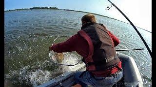 ПАЛКА В ЩЕПКИ НО ОГРОМНОГО МОНСТРА ВЗЯЛИ Трофейная рыбалка 2019 Обьджиг крупный судаккоряги.
