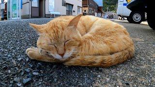 【今週のボツ動画】短い野良猫動画まとめて公開
