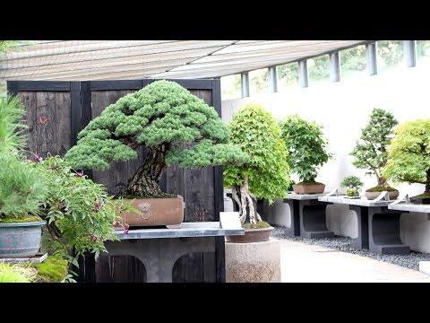 Crespi Bonsai Museum