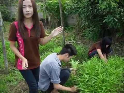 ACC. RMUTLผักบุ้งปลอดสารพิษ.wmv