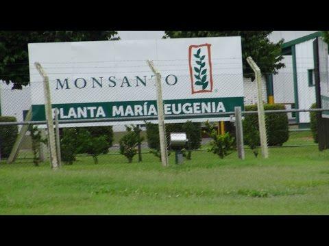 Tödliche Agri Kultur - Wie Monsanto die Welt vergiftet