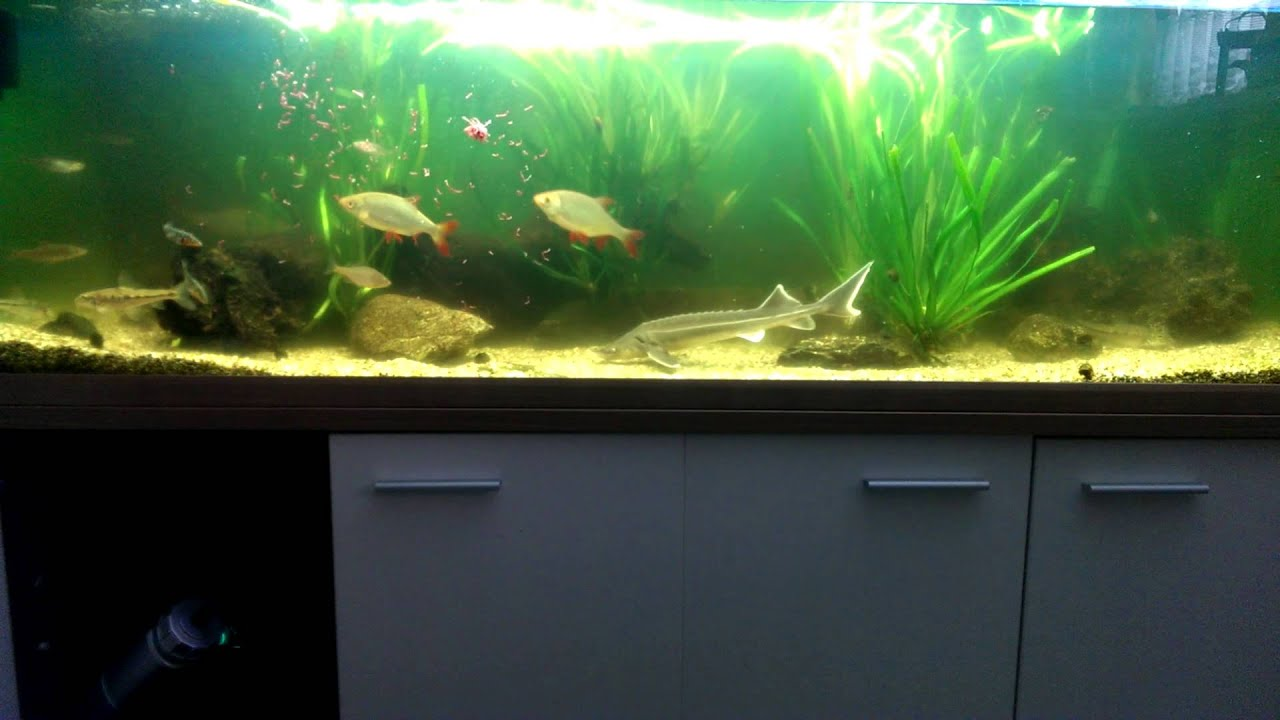 ... im Mai 2014 // My Cold Water Fish Tank May 2014 - YouTube
