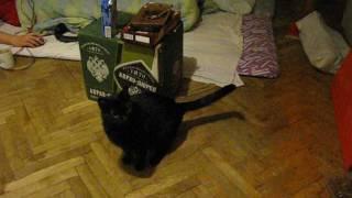Кормящая кошка реагирует на аудиозапись мяуканья котят