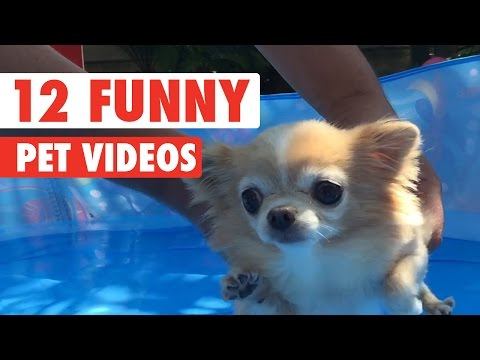 12 Funny Pet Videos Compilation 2016