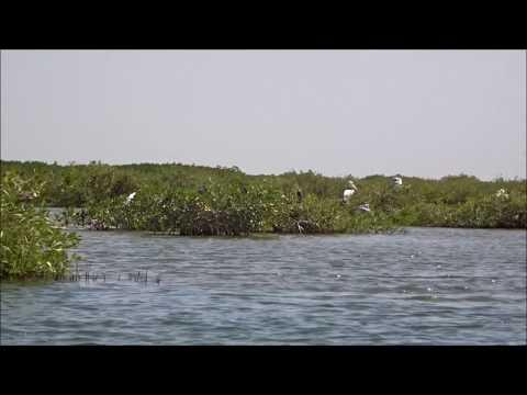 La mangrove du delta du Saloum, Senegal, Africa