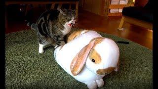 巨大なうさぎを癒すねこ。-Maru heals the huge rabbit.-