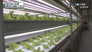 건물 안에서 채소를 대량으로 재배할 수 있다? / YT…