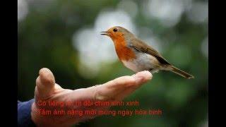 Ta vui ca vang - Văn Phụng - Tiếng hát Quỳnh Dao