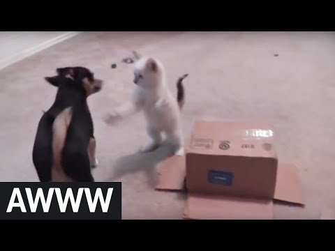 Kitten's first cardboard box is an epic encounter