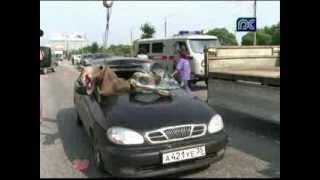 ДТП с лосем в Череповце. Road accident with an elk
