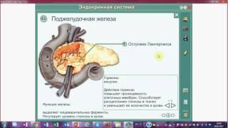 Поджелудочная железа. Инсулин и глюкагон. Гормоны и ферменты.Подготовка к ЕГЭ и ОГЭ по биологии