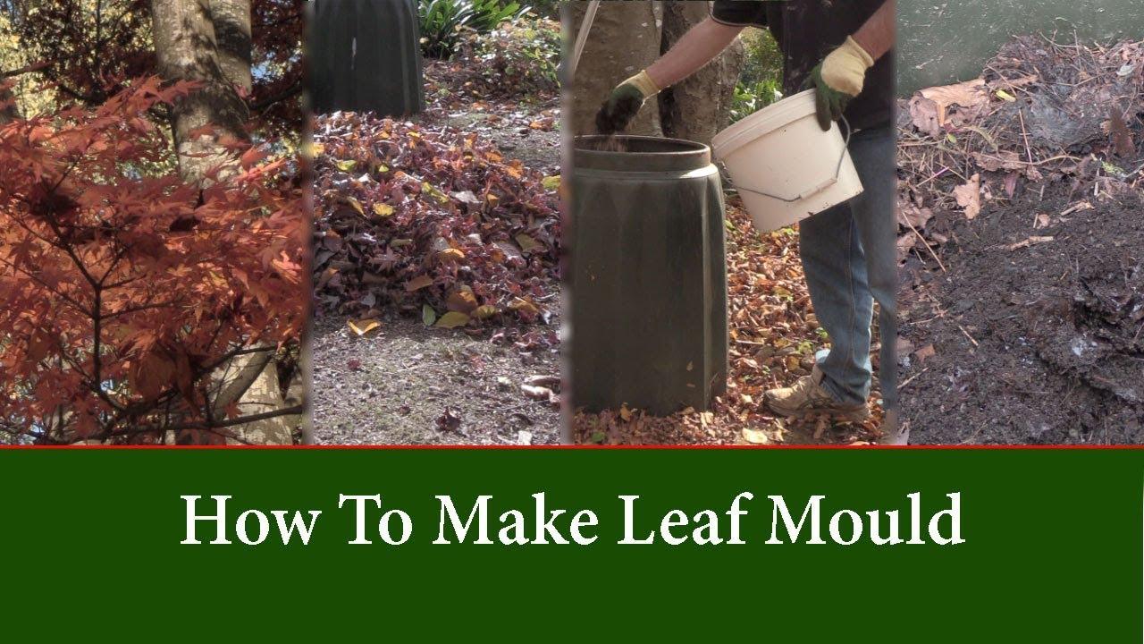 How To Make Leaf Mould Mold Fast