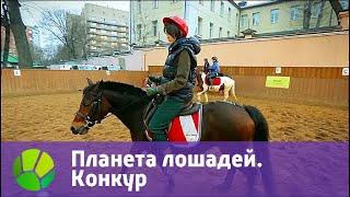 Планета лошадей. Конкур   Живая Планета