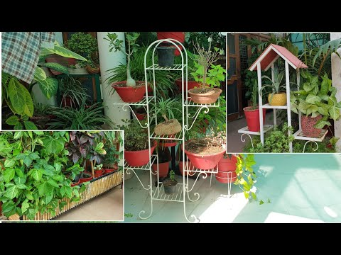 All My Plant Stands With Prices || Fun Gardening