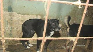 Ад для собак: приют для животных превратили в свалку