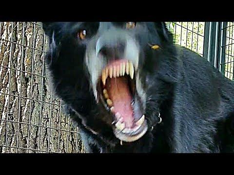 What Happens?!? RAW Food Fed To Large Dog (K9 Mukbang)