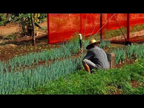 ALMT auxilia o fortalecimento da agricultura familiar em Mato Grosso