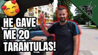 20-new-liiiit-tarantulas