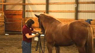 Applying Fly Spray to a Spooky Horse with Gentle Horse Trainer Missy Wryn