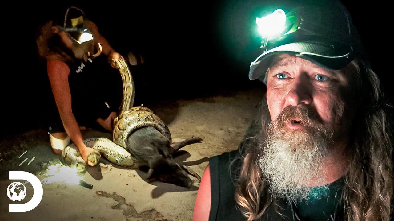 Equipe salva porcos de ataque de pítons em uma caça noturna | Caçadores de Pítons | Discovery Brasil