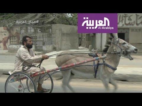 صباح العربية | تعرفوا على الحمار النجم  - نشر قبل 1 ساعة