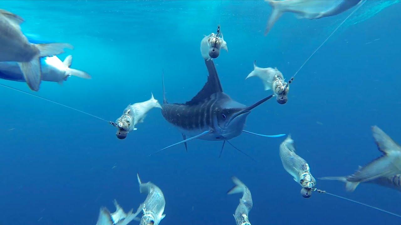 Create Fish-Scale Design