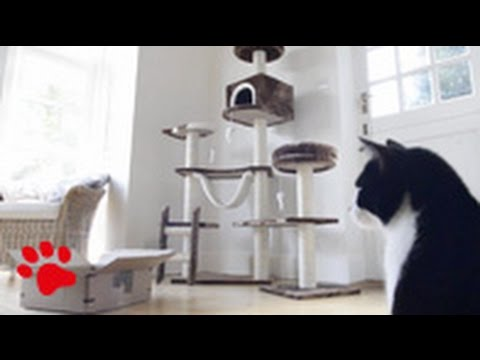 How to please your cat…