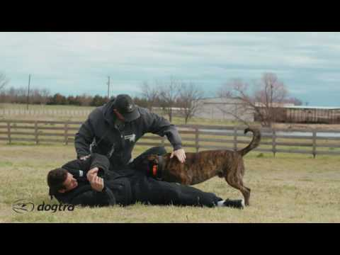 Ep.7 - K9 Dog Training with Mike Ritland: Bite Training