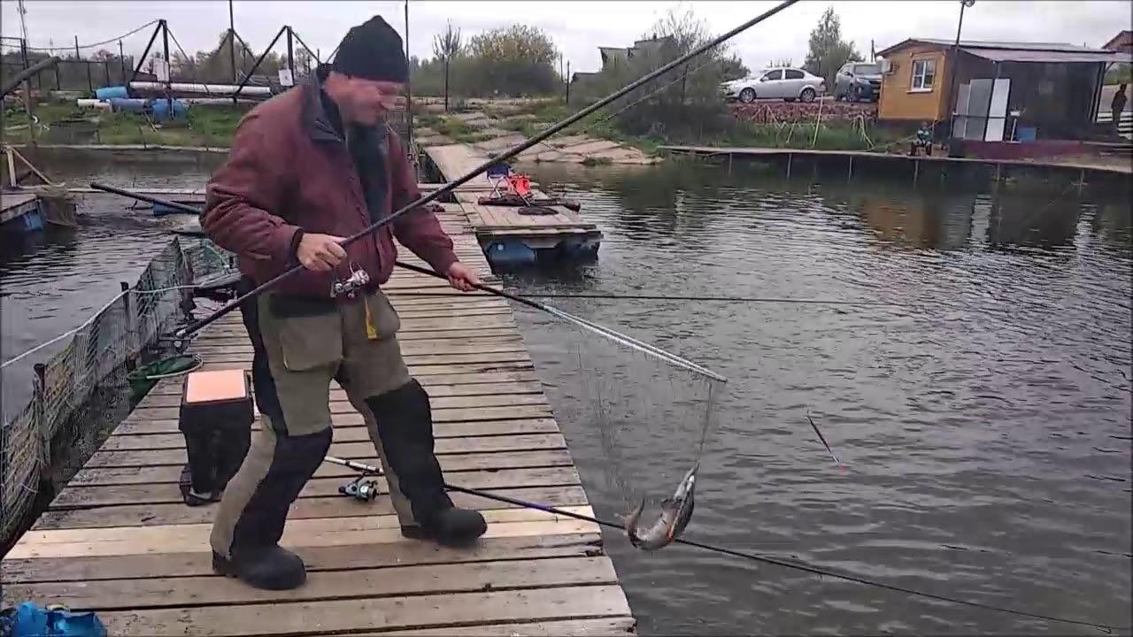 Платная рыбалка в подмосковье савельево