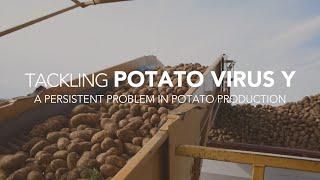 Tackling Potato Virus Y