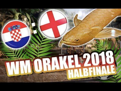 TAG24 WM Orakel - Das prophezeit Jolanda für das Spiel Kroatien gegen England