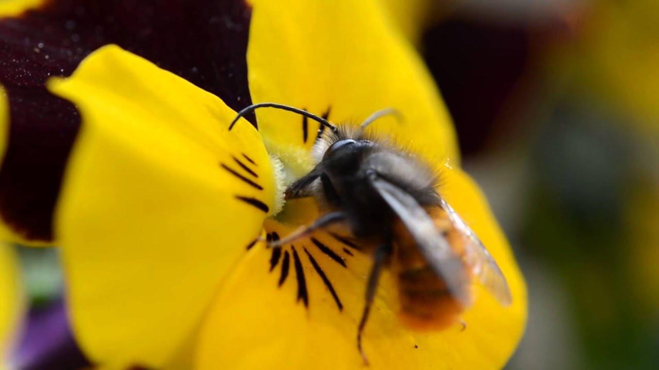 Kết quả hình ảnh cho ong hút mật