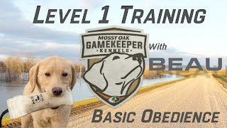Basic Obedience Training   Semi-Started Dog
