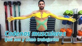Cadenas musculares, qué son y cómo trabajarlas