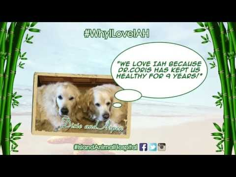 What are Pets Saying About Island Animal Hospital? Find Out!