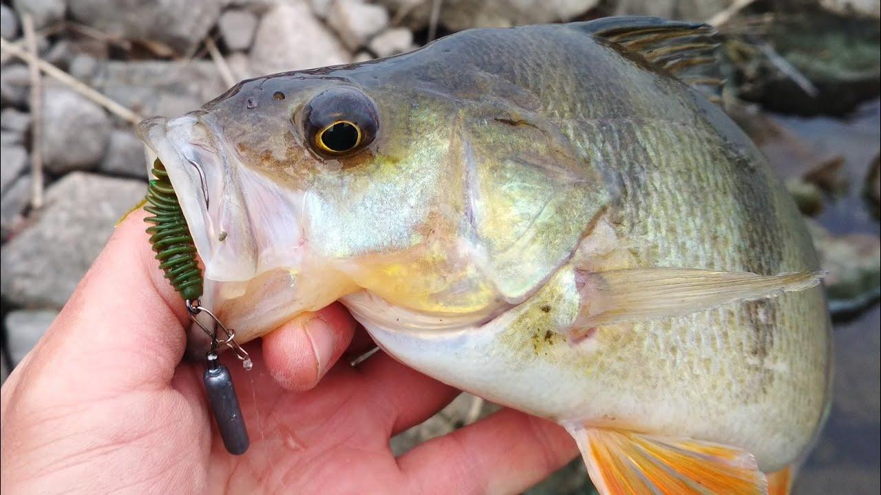 ТАКИХ МОНСТРОВ Я ЕЩЁ НЕ ЛОВИЛ! Рыбалка на ультралайт - заливы / рыболовные заметки